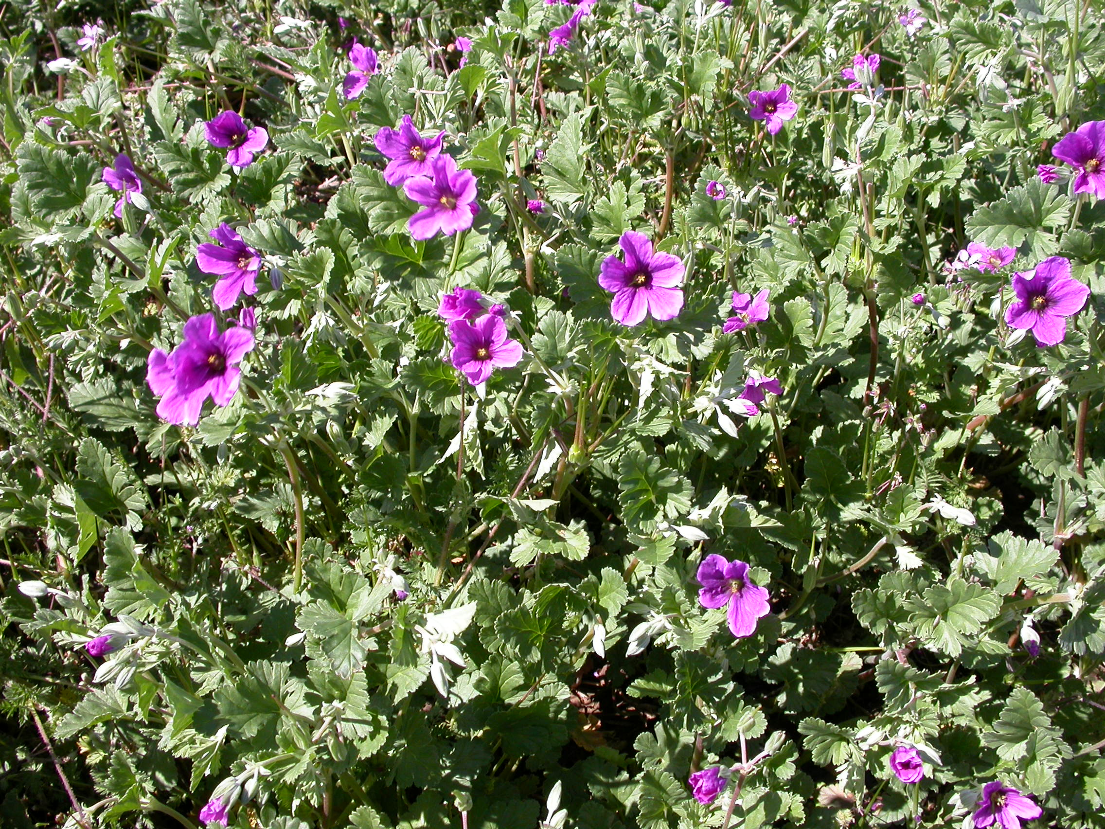 Weeds of field crops 3 4 mightylinksfo